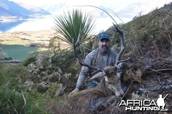Free Range wild stag - New Zealand