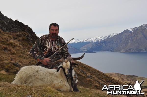 NZ Goat