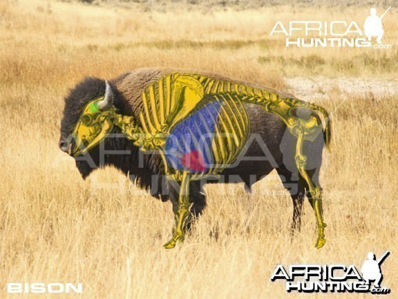 Bowhunting Vitals Bison