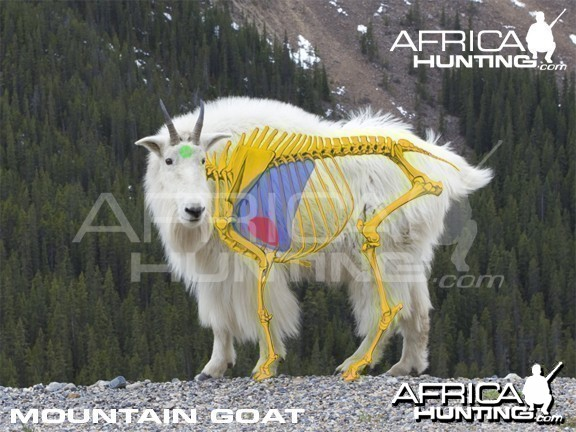 Bowhunting Vitals Mountain Goat
