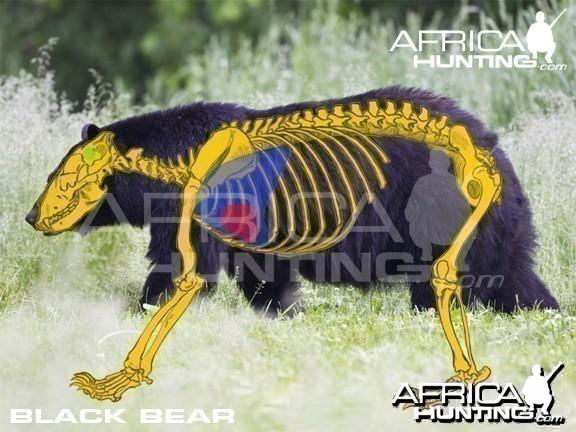 Hunting Vitals Black Bear