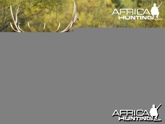 Hunting Vitals Elk