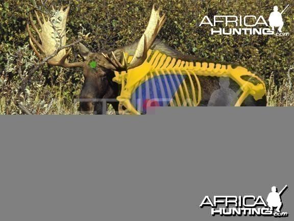 Hunting Vitals Moose