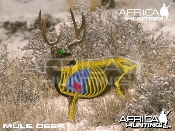 Hunting Vitals Mule Deer
