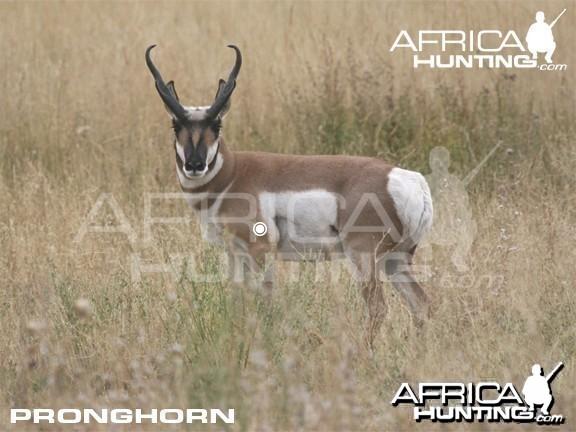 Hunting Vitals Pronghorn