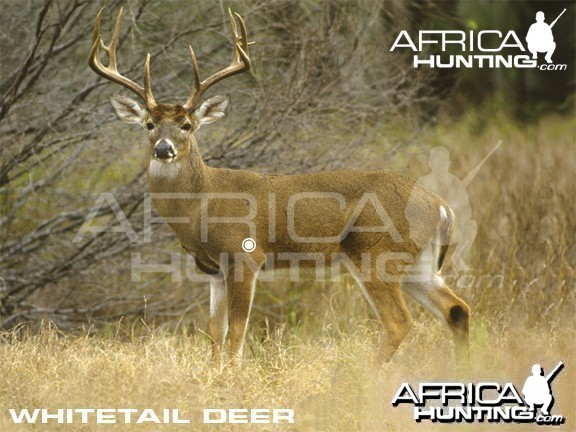 Hunting Vitals Whitetail Deer