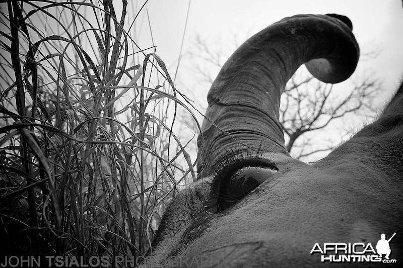 kudu, eye