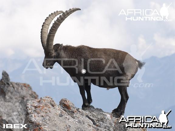 Bowhunting Vitals Ibex