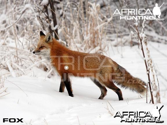 Hunting Vitals Fox