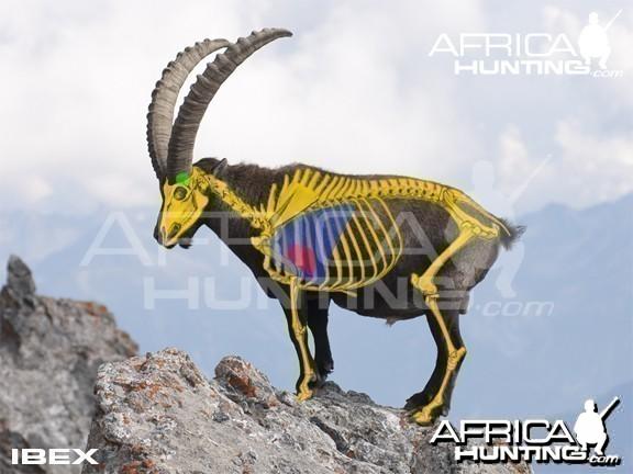 Hunting Vitals Ibex