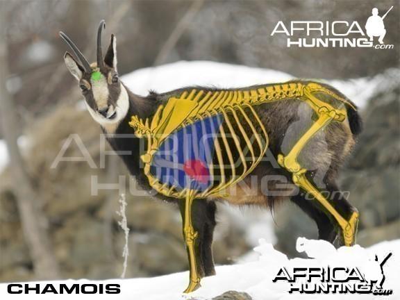 Hunting Vitals Chamois