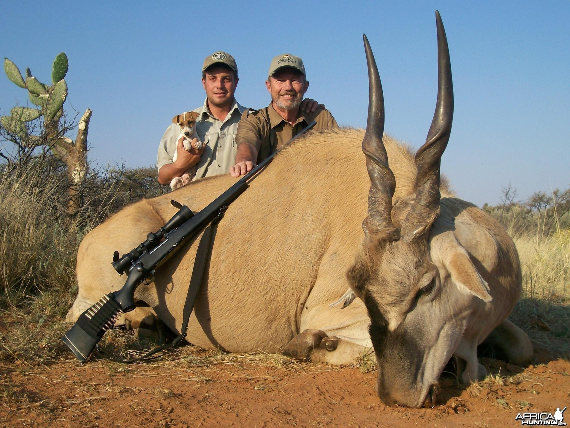 Eland Hunt at HartzView Hunting Safaris