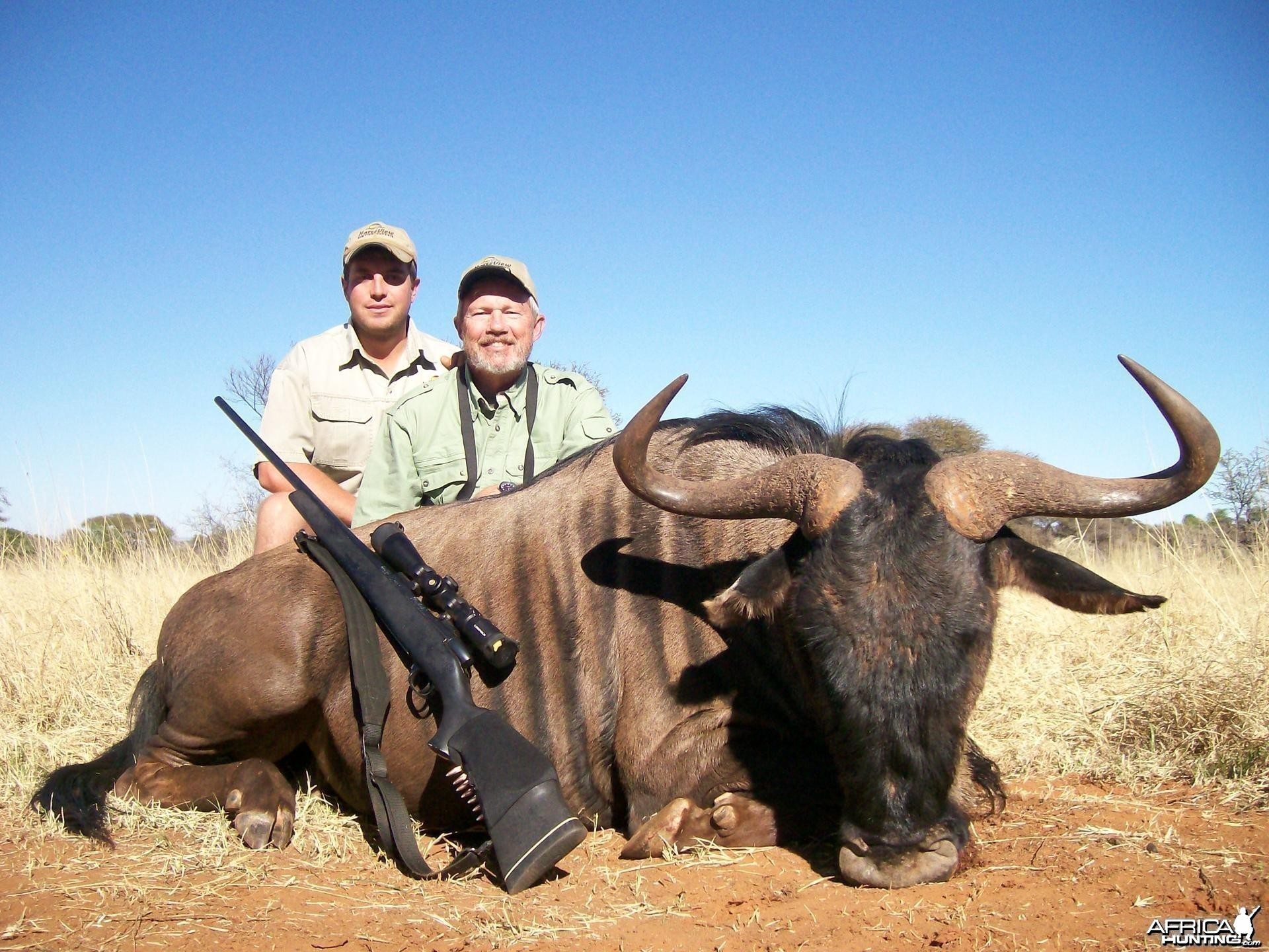 Blue wildebeest Hunt at HartzView Hunting Safaris