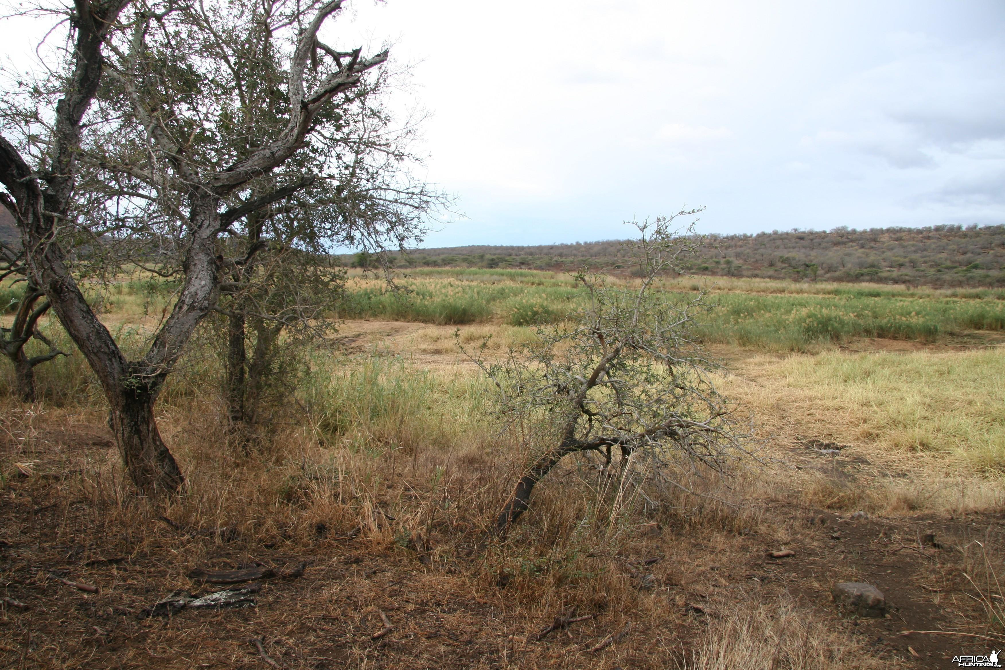 Impala Meadow