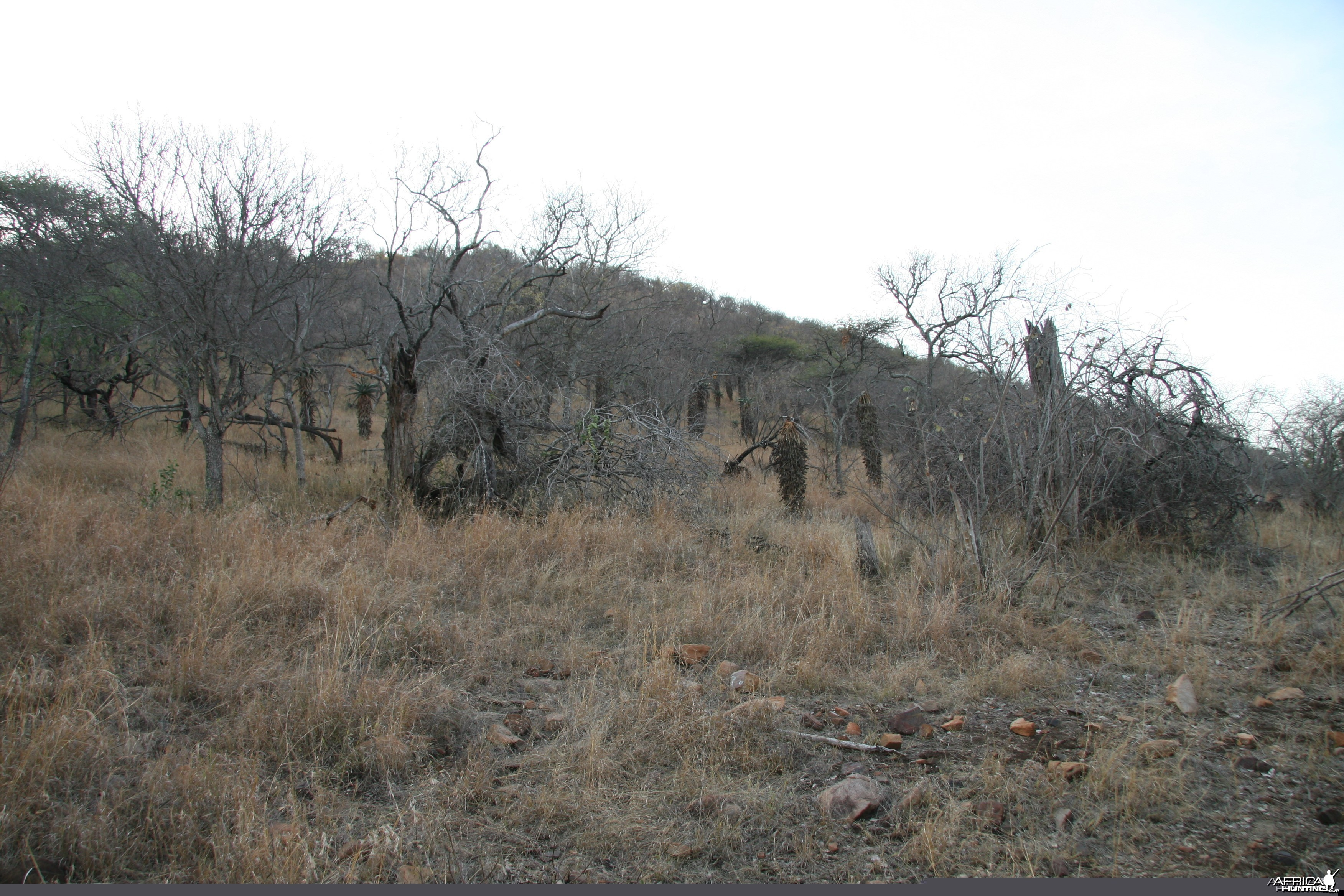 Kudu Meadow