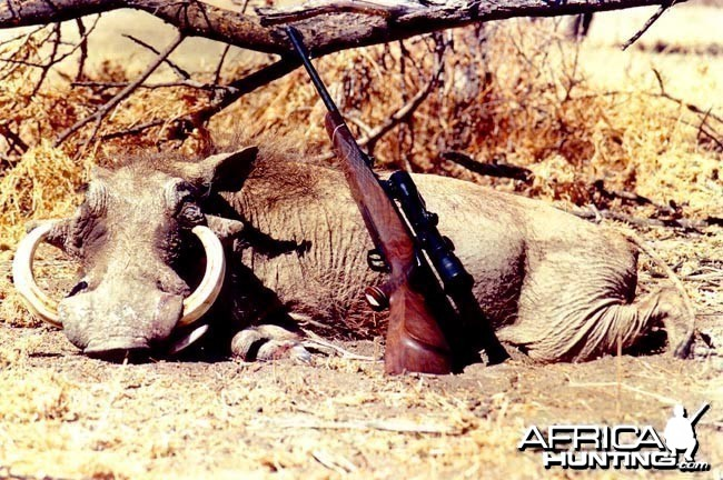 Hunting Warthog (14 in - 36 cm)