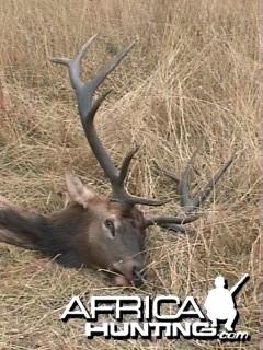Elk Cape