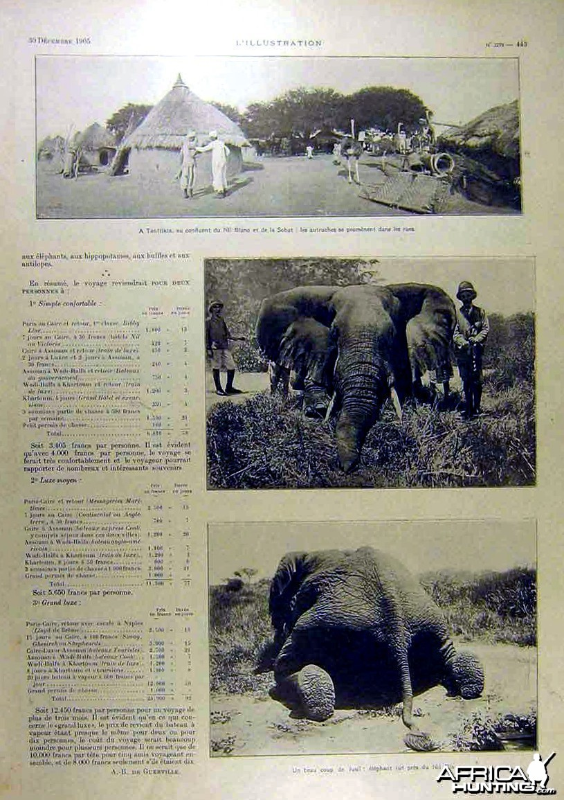 Big Game Elephant Hunt