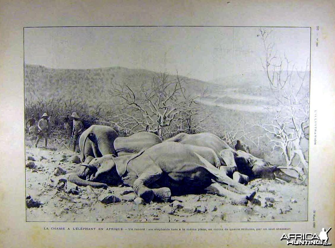 Chasse a l'Elephant en Afrique