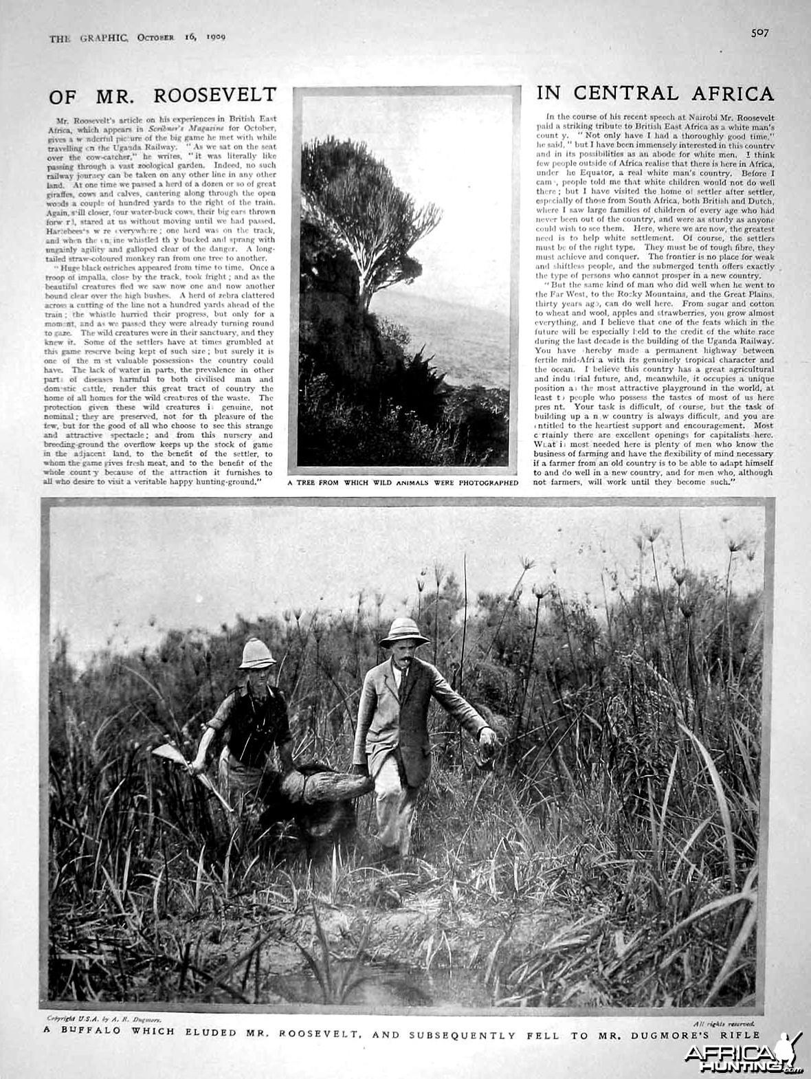 Roosevelt Hunting Buffalo