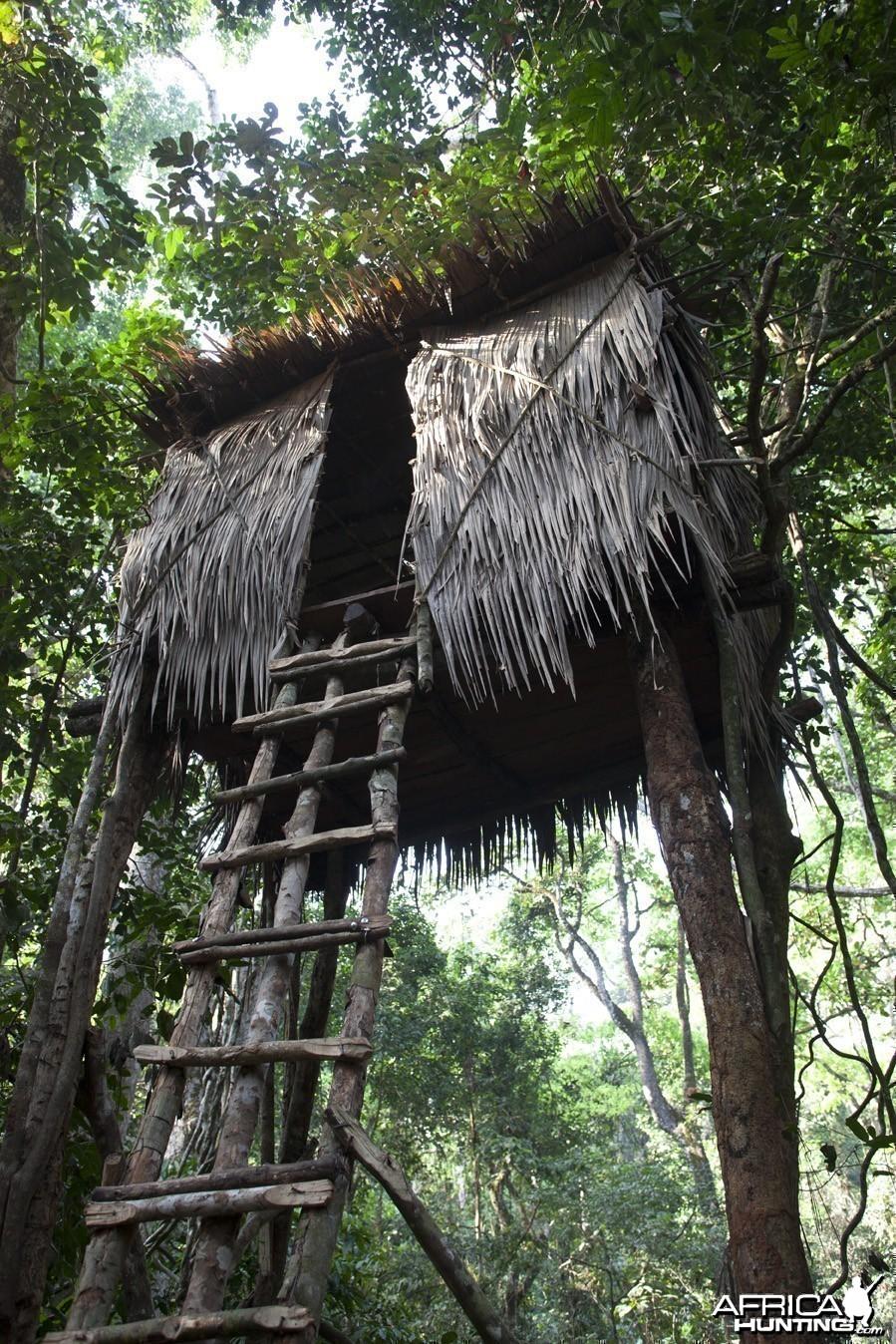 Forest machan high tower