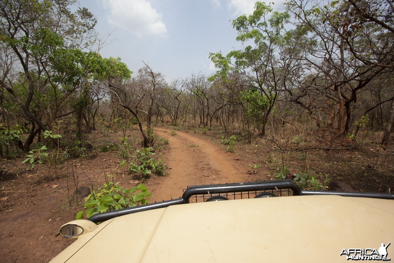 Road through sparse bush