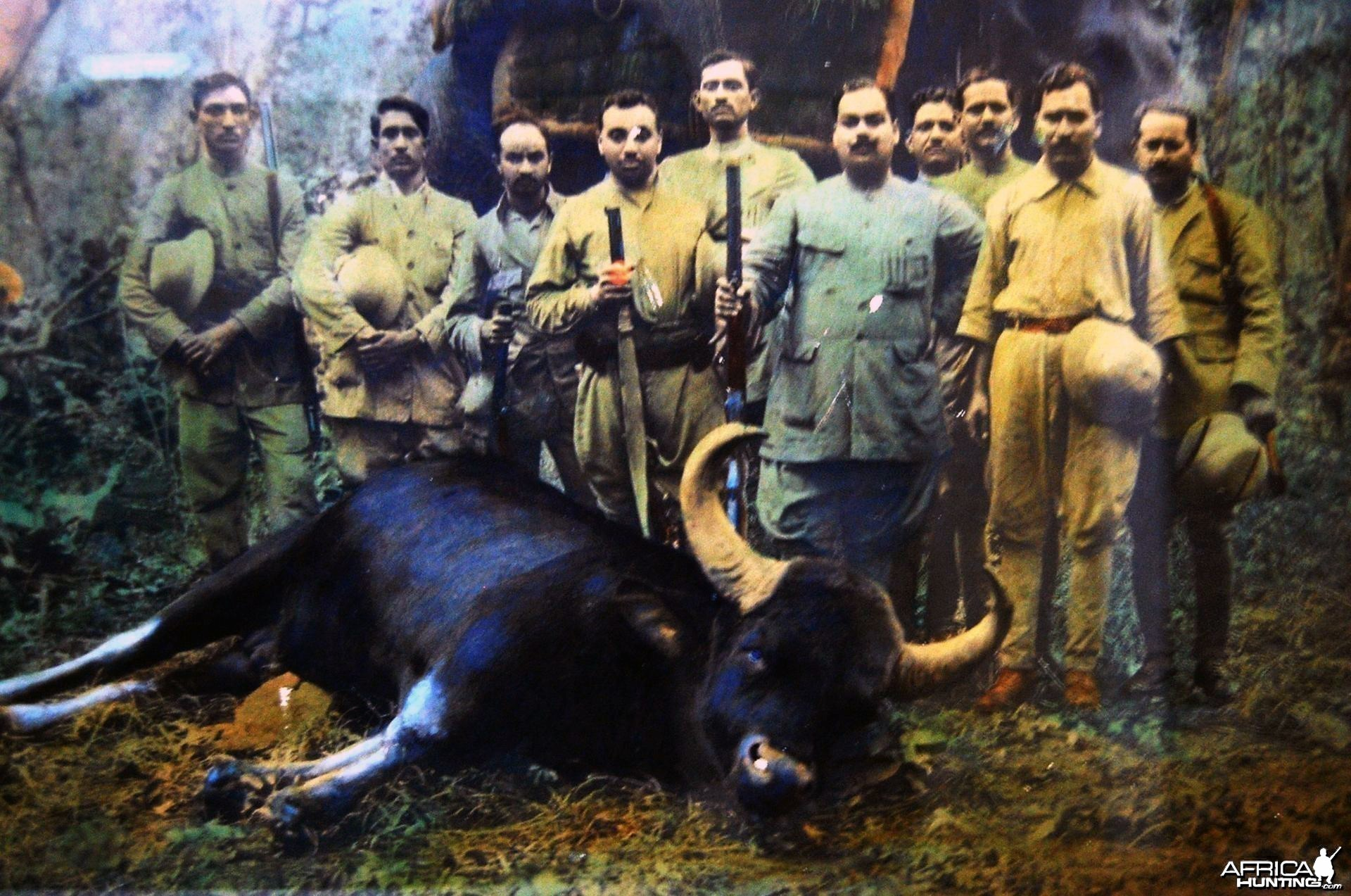 Hunting Gaur in India