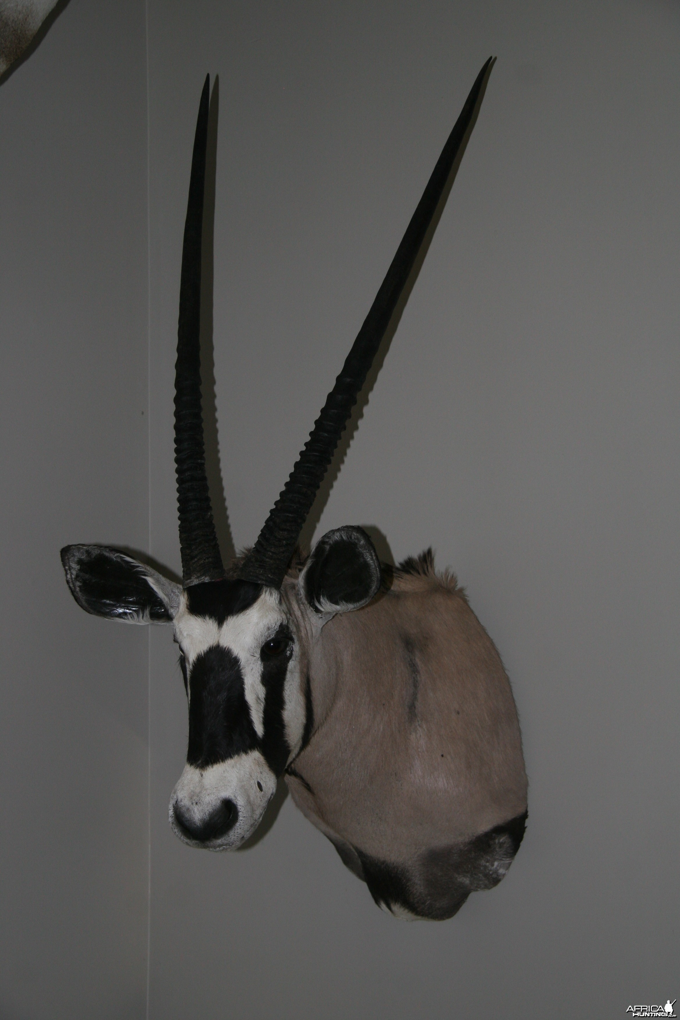Mr. Krafts Gemsbok
