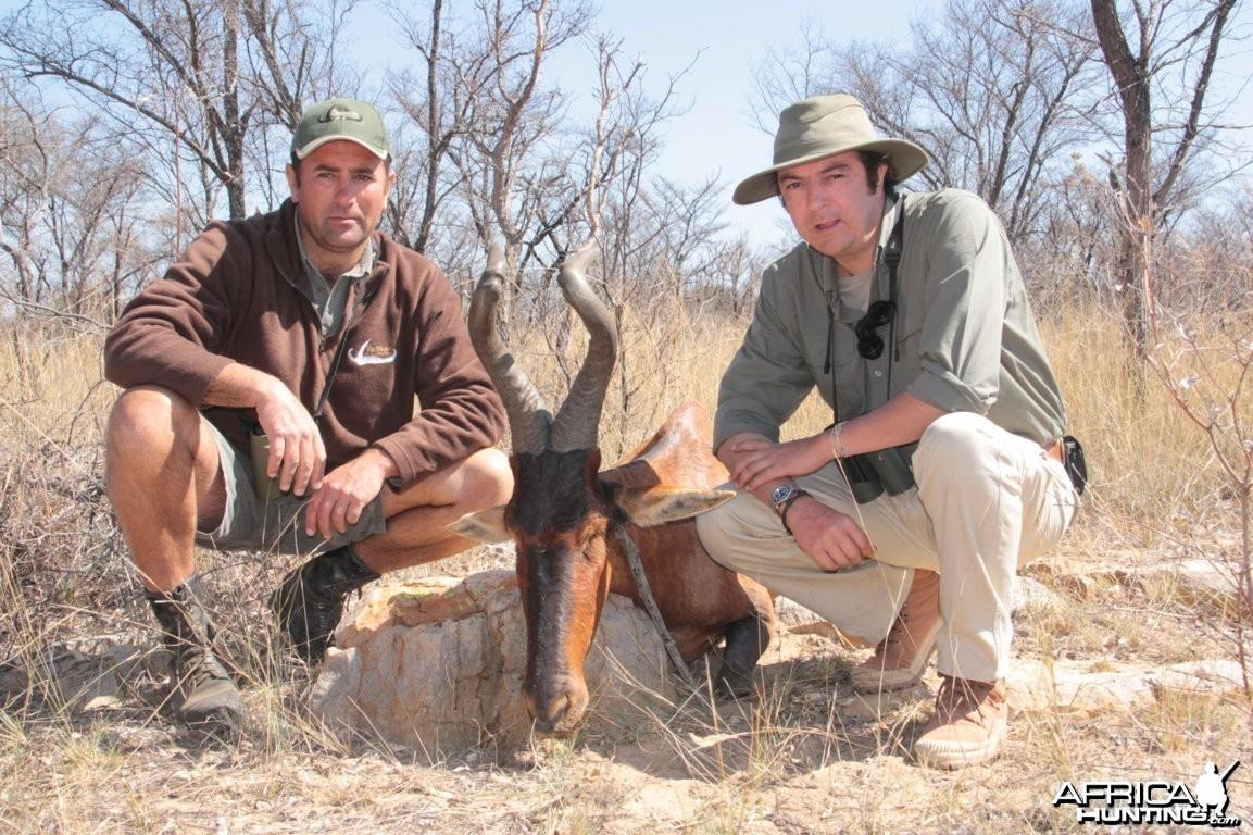 Hartebeest Limpopo