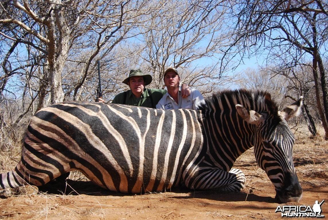 Zebra Limpopo