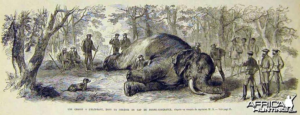 Elephant hunt