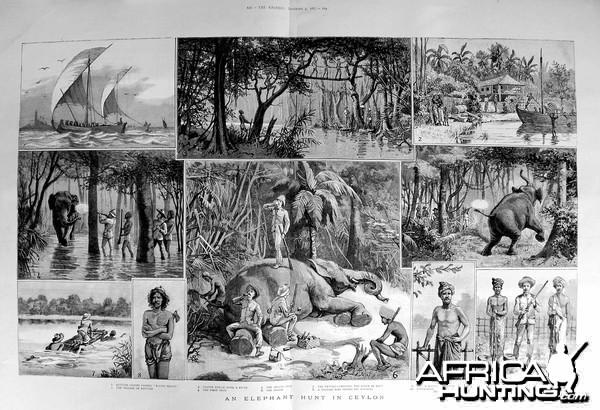 An Elephant Hunt in the Ceylon