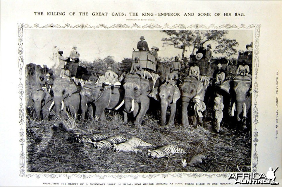 The Killing of the Great Cats