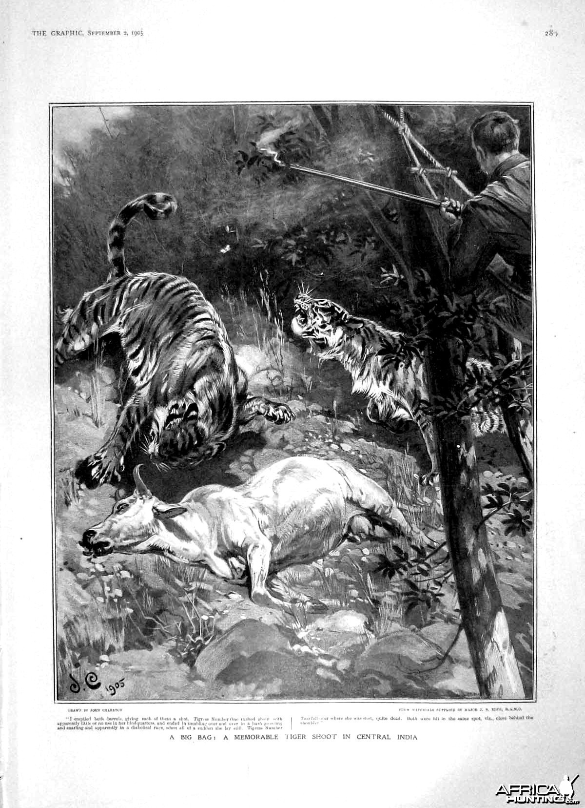 Tiger shoot in Central India