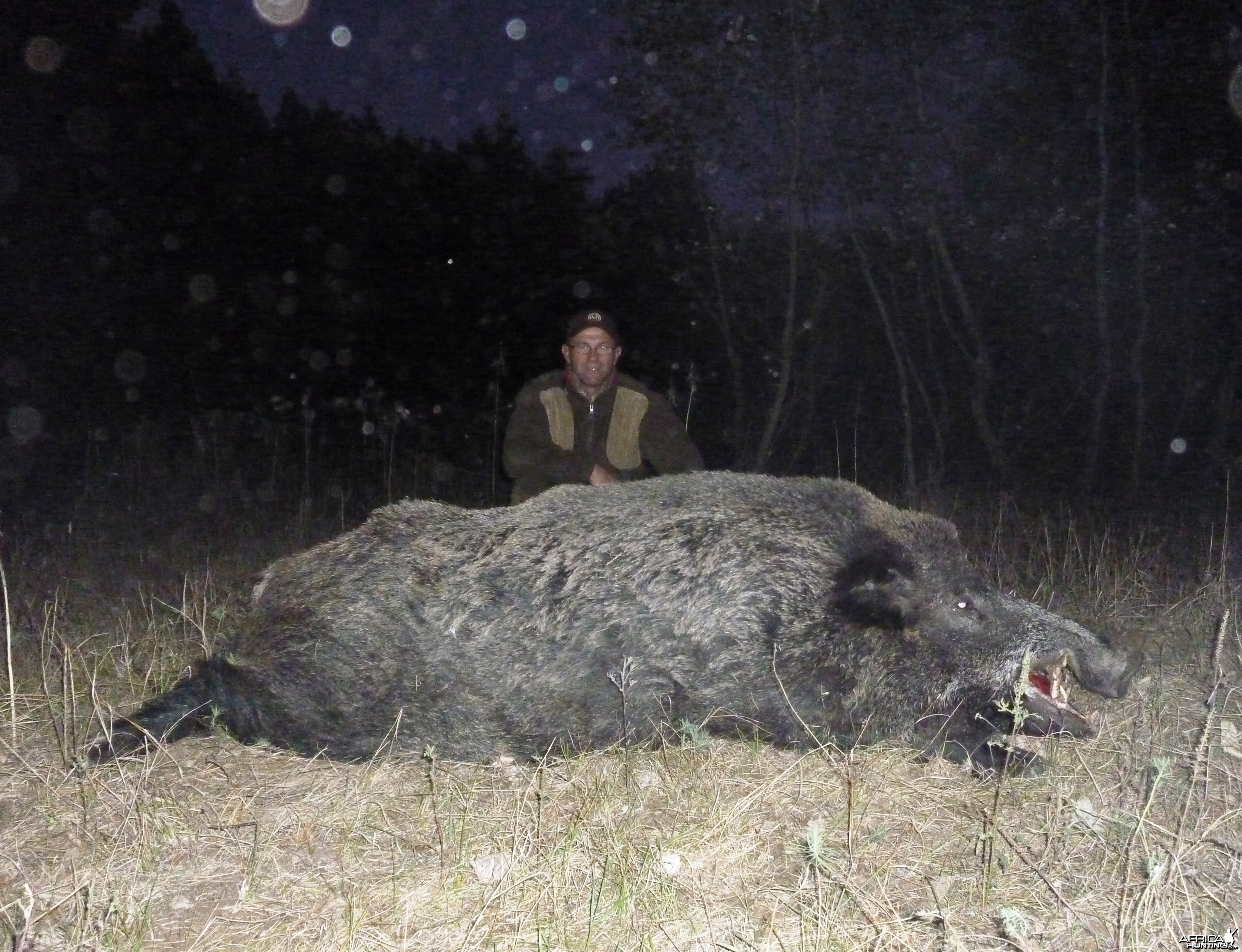 150 kg Wild Boar hunted in Hungary
