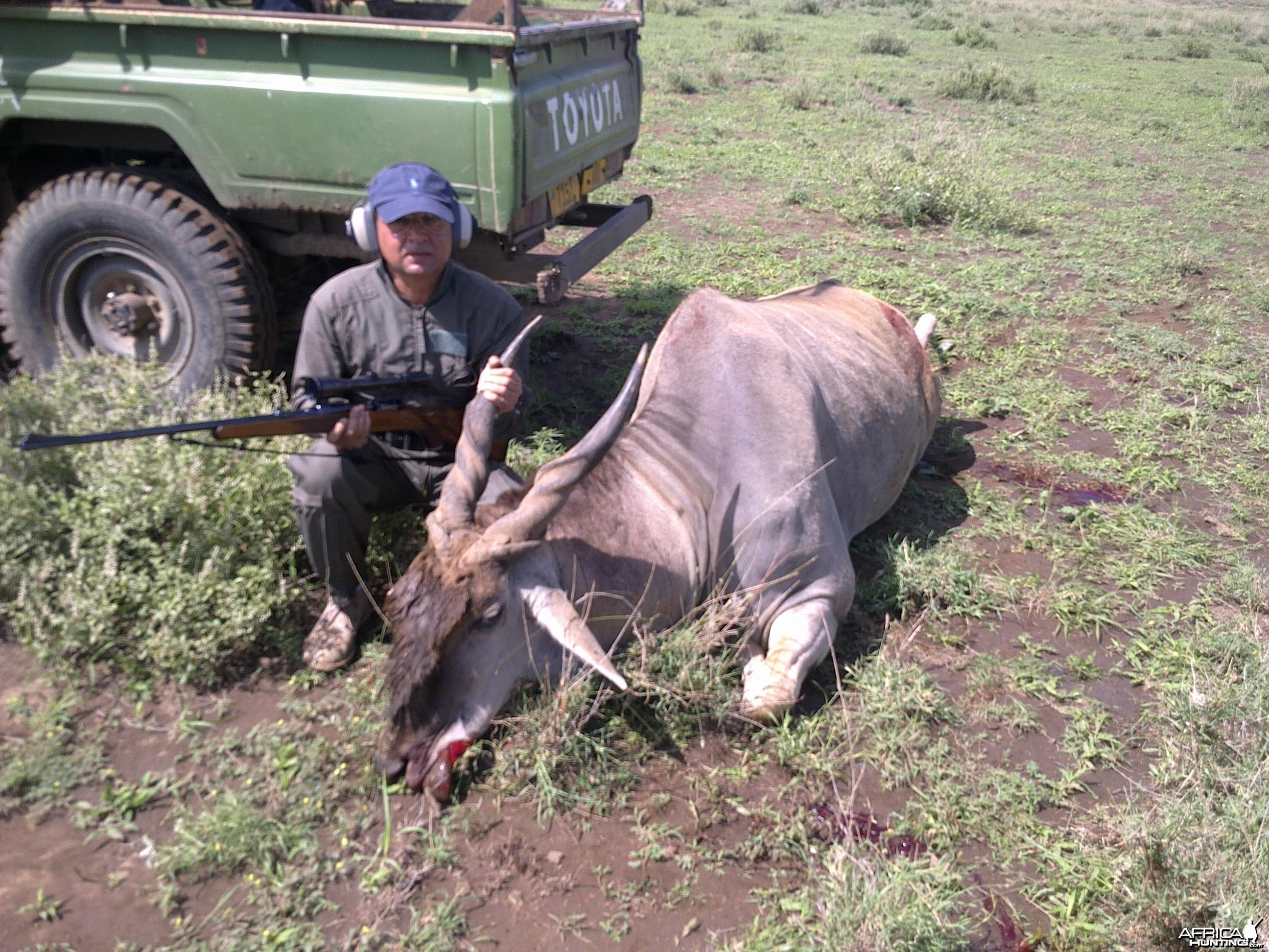 Mature Eland Bull