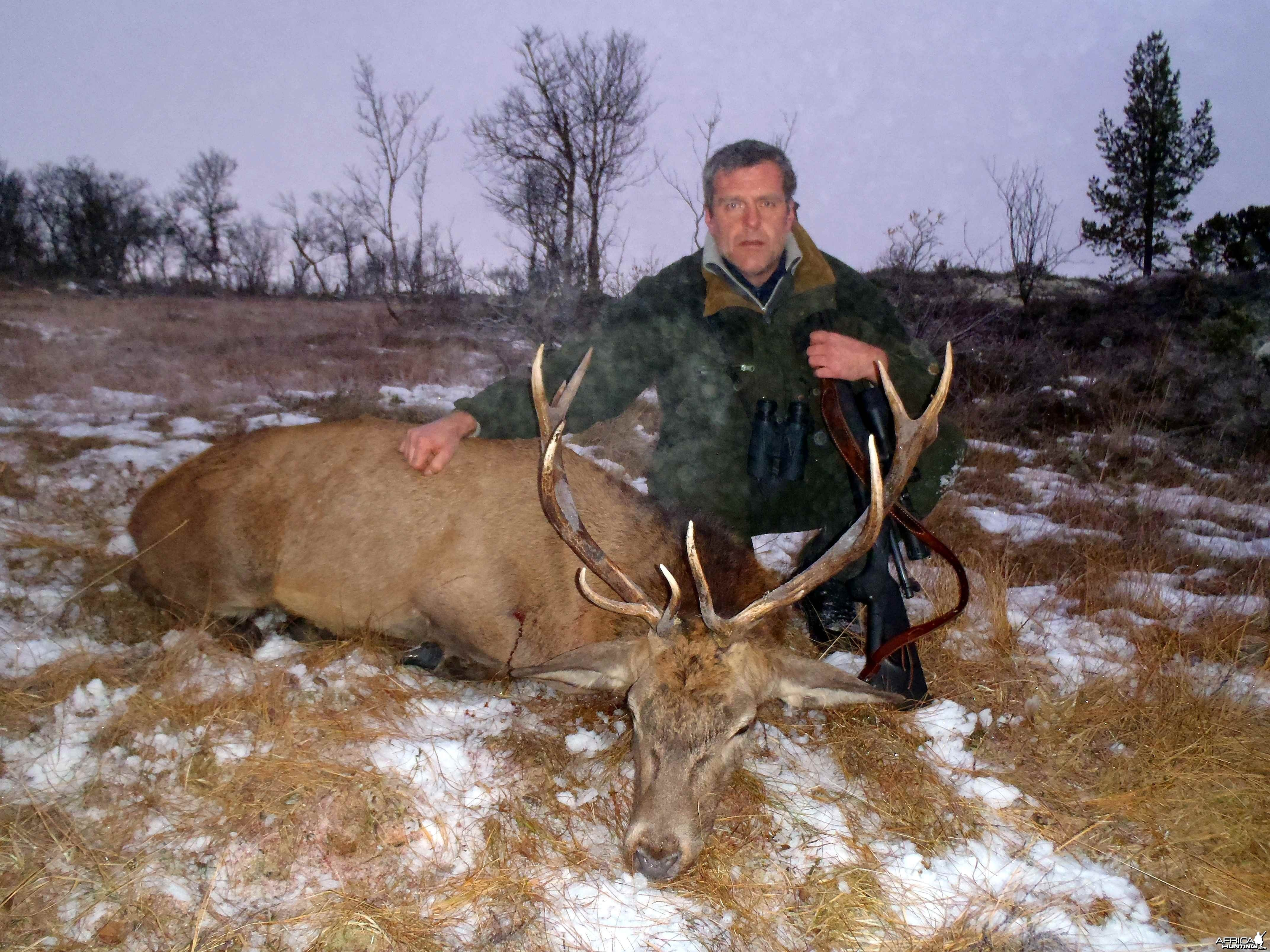 Red deer from my farm