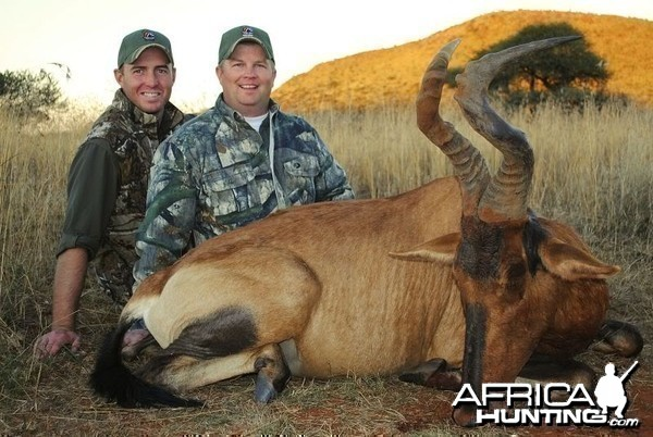 Hartebeest hunted in South Africa