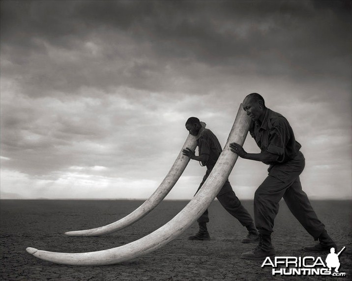 Two Rangers with Tusks of Killed Elephant, Amboseli, 2011 by Nick Brandt