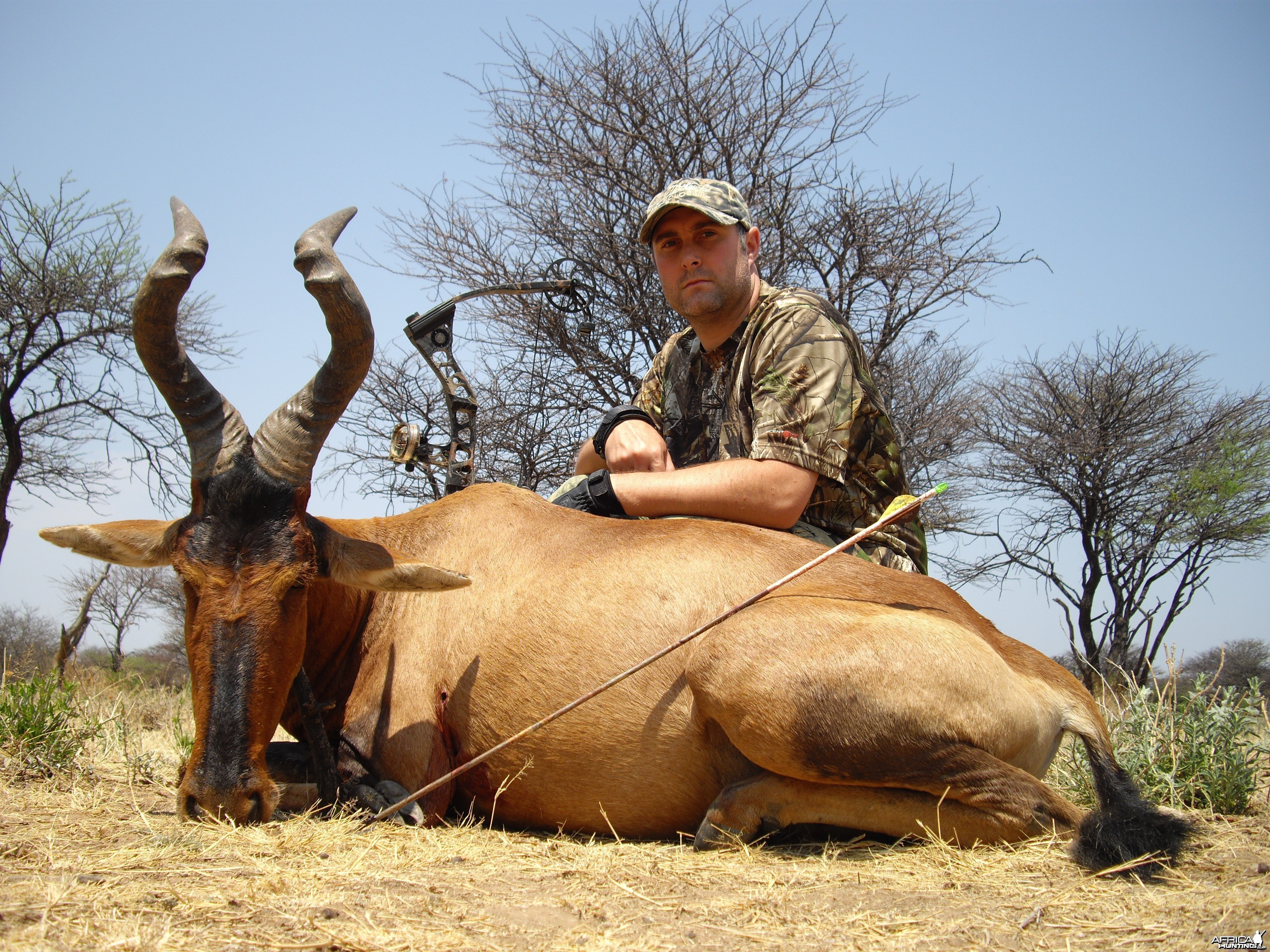 Bowhunting Red Hartebeest in Namibia