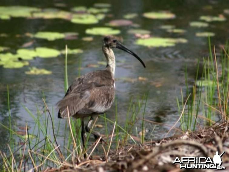 Bird Australia