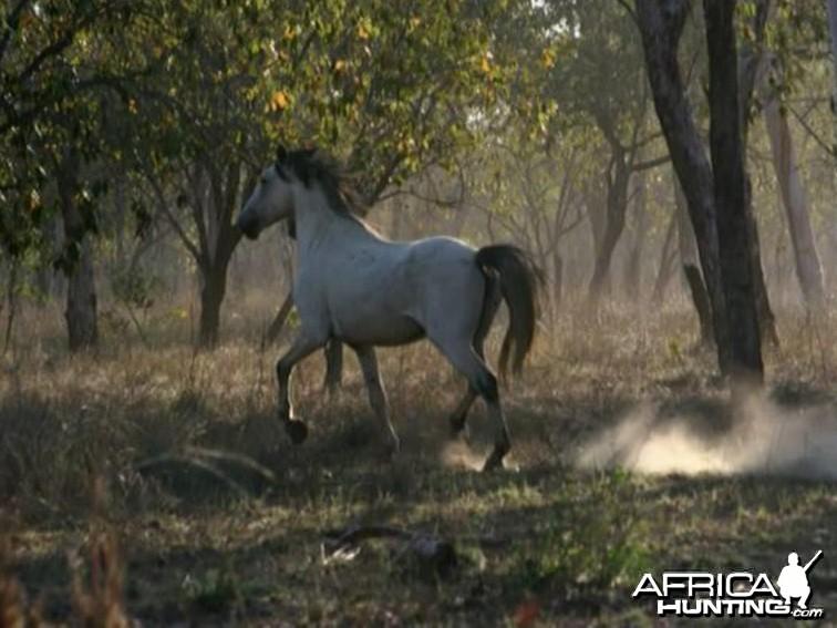 Horse Australia