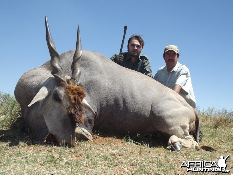 Eland with Savanna Hunting Safaris