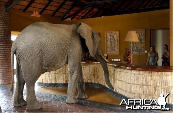 Elephants at the Mfuwe Lodge in Zambia