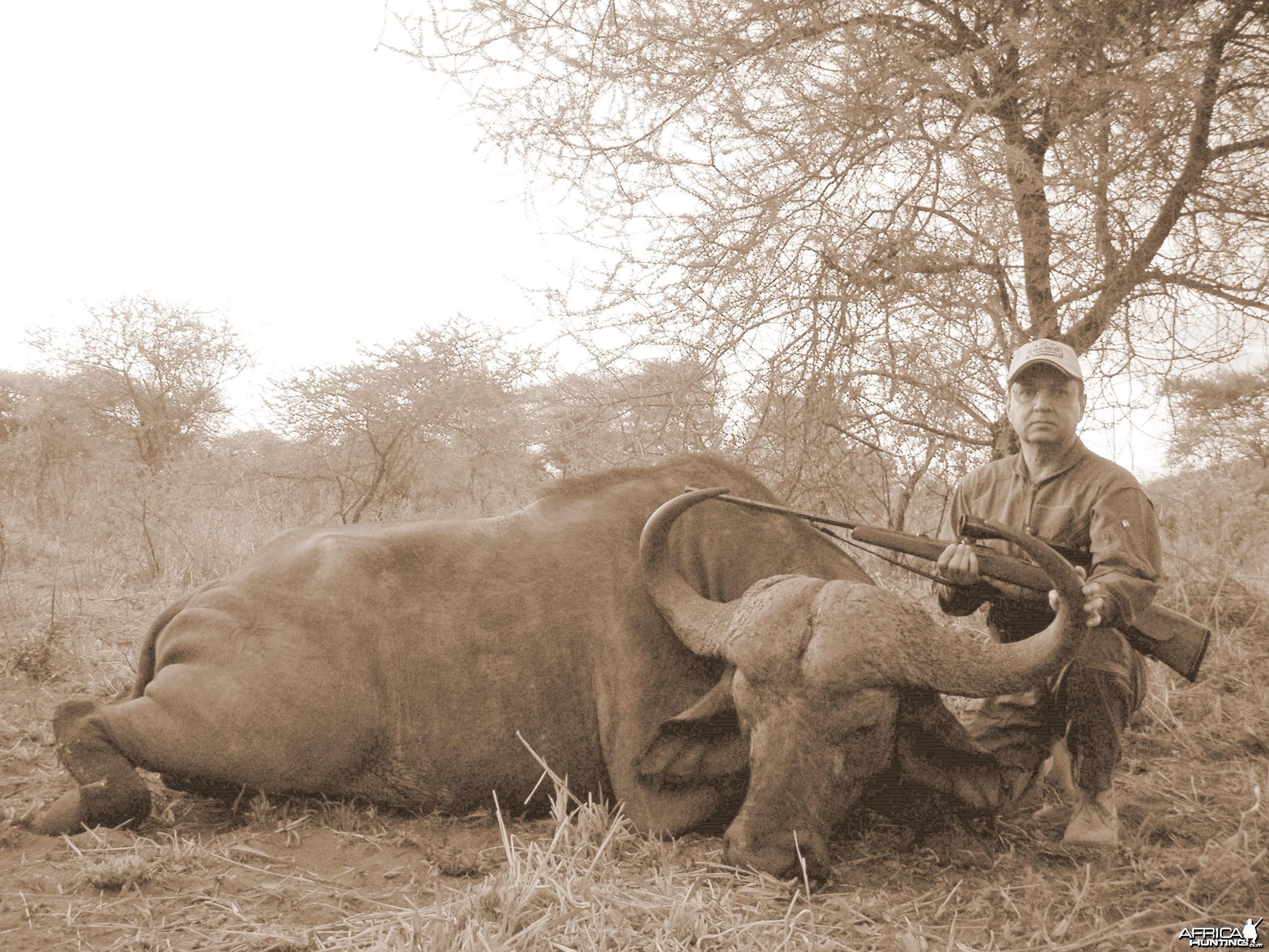 Tanzania Buffalo