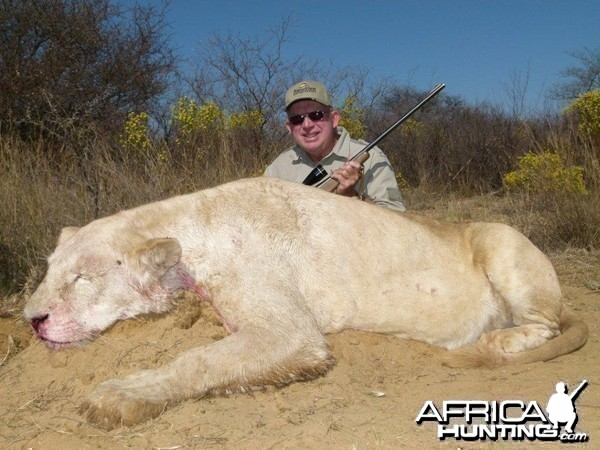Hunting Lioness South Africa