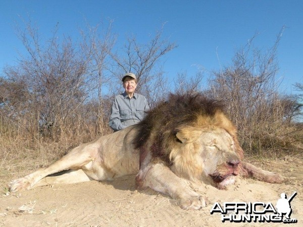 Hunting Lion South Africa