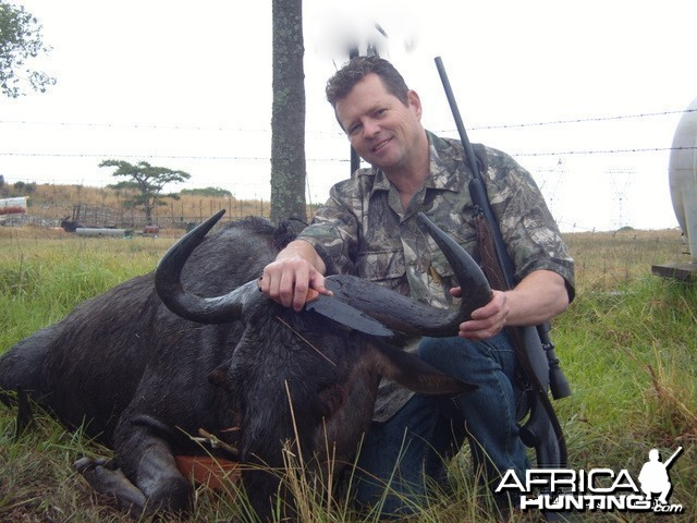 "Got a very nice 29,5"" blue wildebeest today"