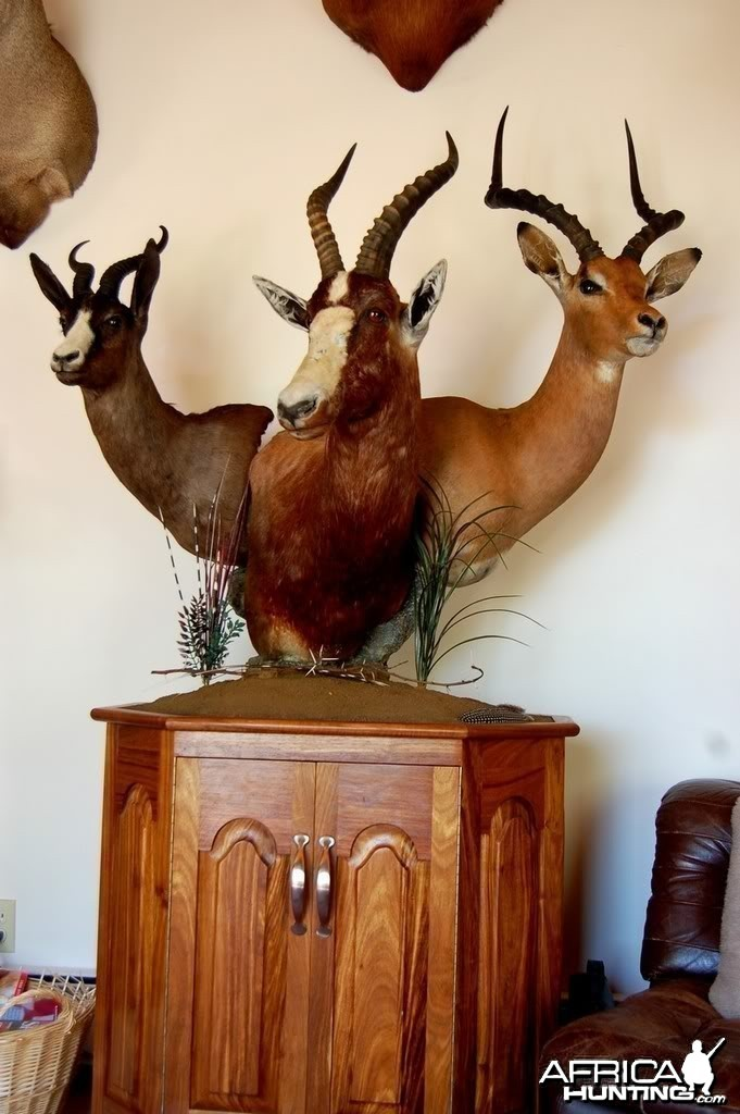 Moredou Taxidermy