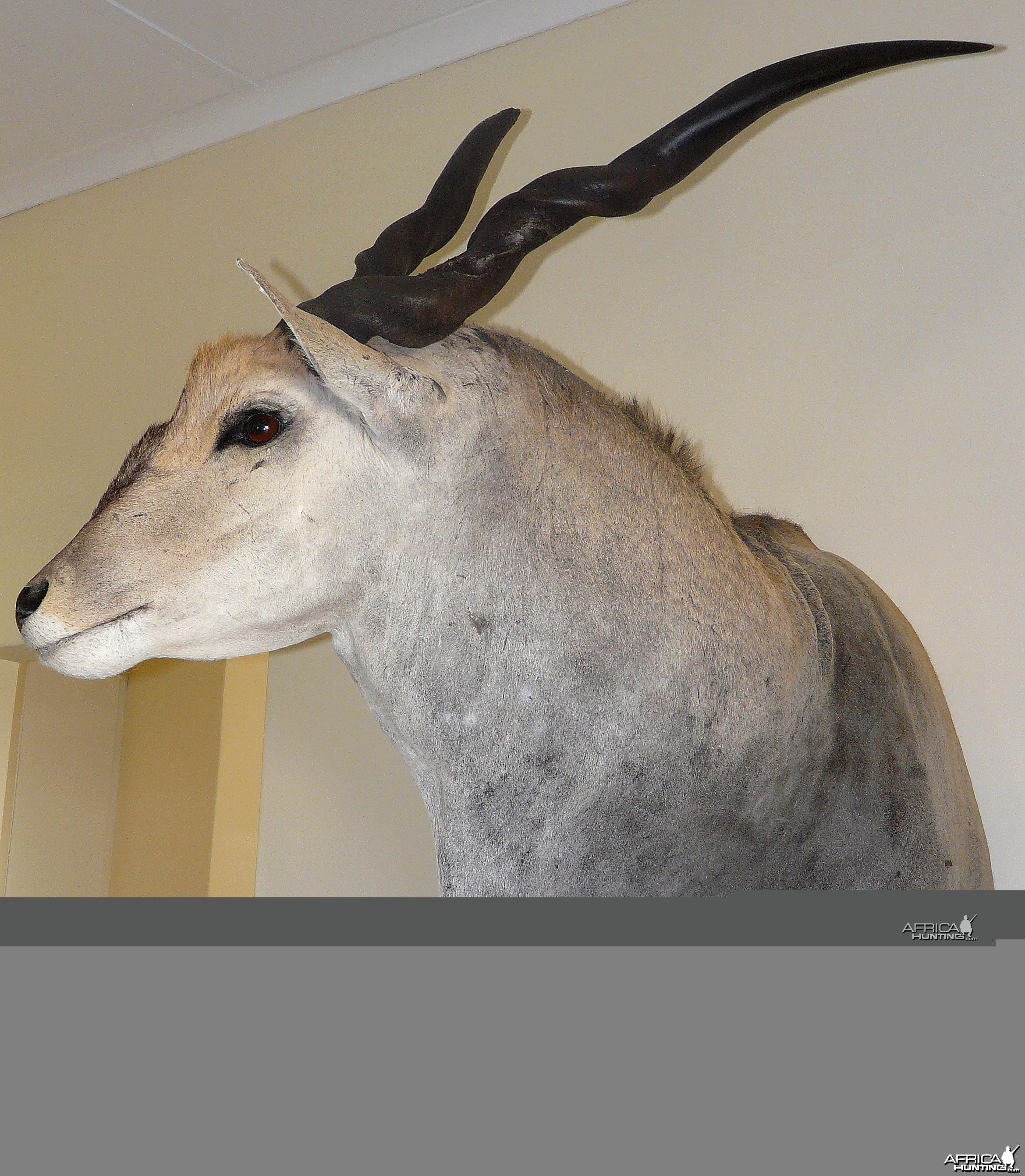 Casper's Taxidermy in Namibia